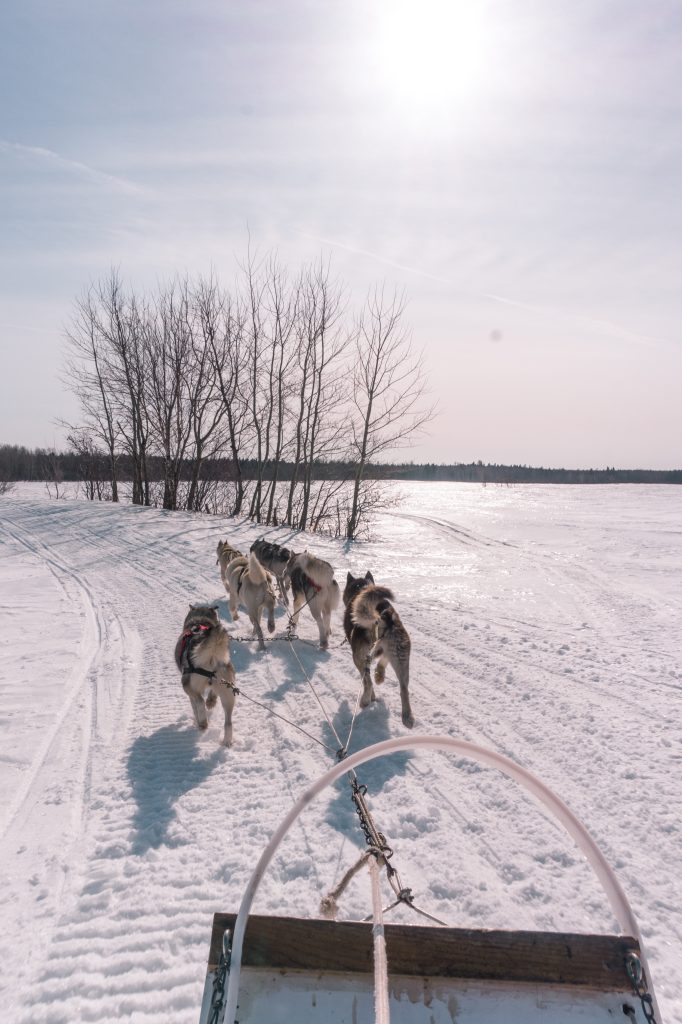 7 Things to Do in Quebec City in Winter - Go Dog Sledding
