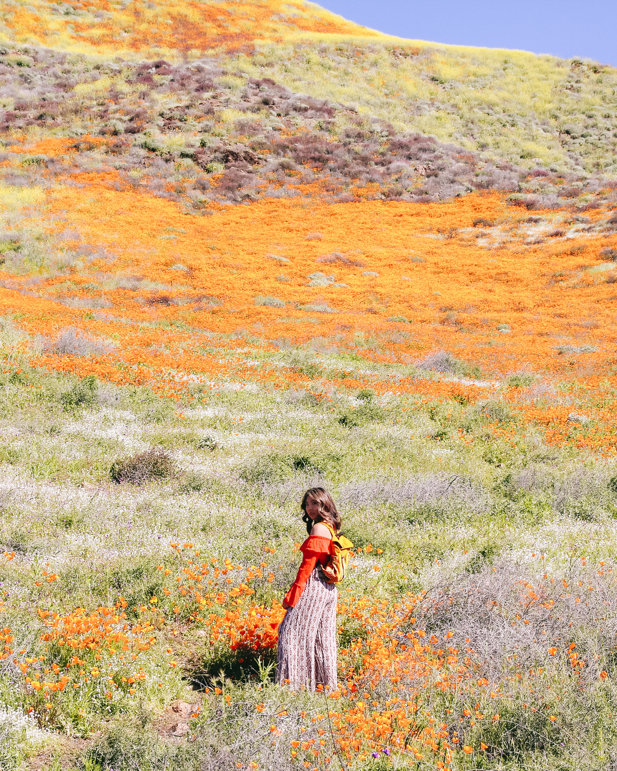 The Most Instagram Worthy Flower Fields - Walker Canyon Superbloom