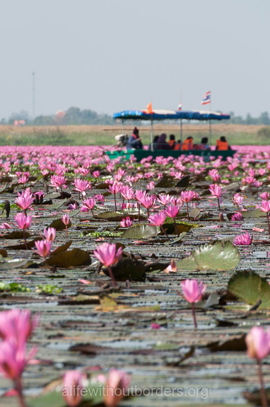 The Most Instagram Worthy Flower Fields - Udon Thani, Thailand
