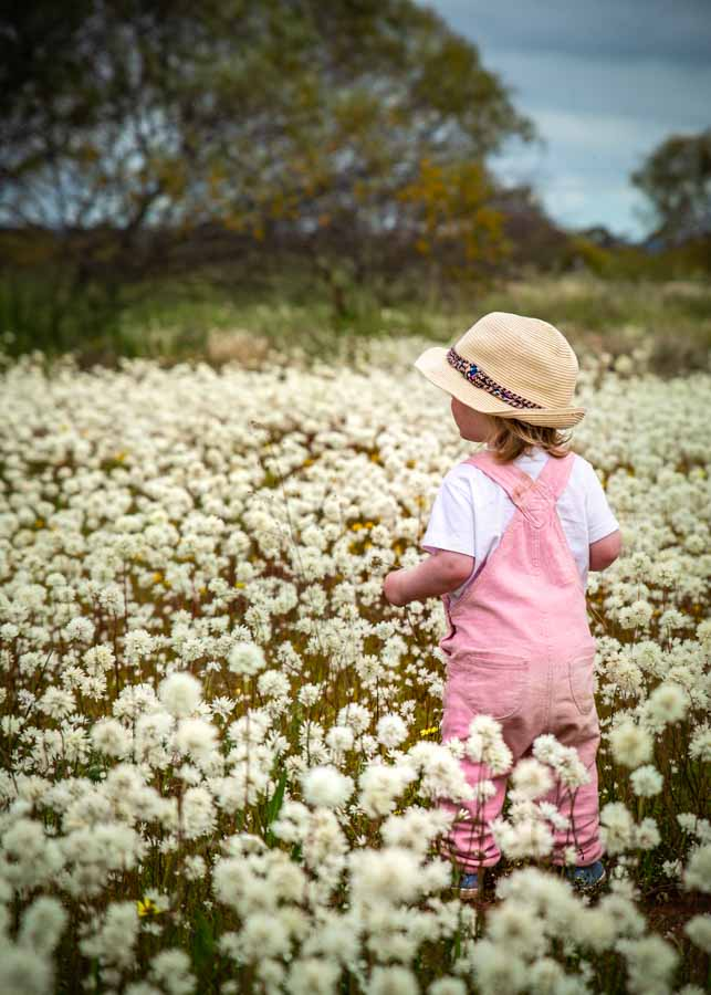 The Most Instagram Worthy Flower Fields - Western Australia