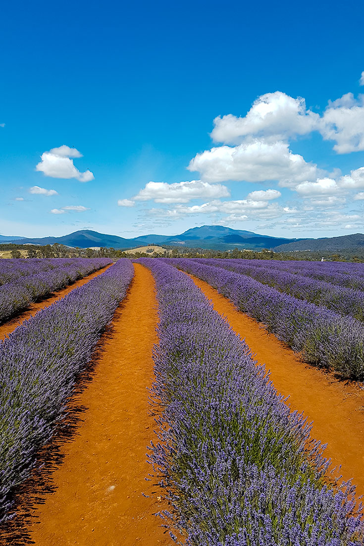 The Most Instagram Worthy Flower Fields - Tasmania Flower Fields
