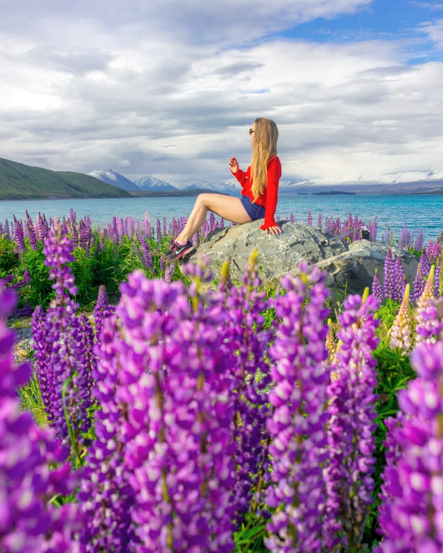 The Most Instagram Worthy Flower Fields - Lupins New Zealand