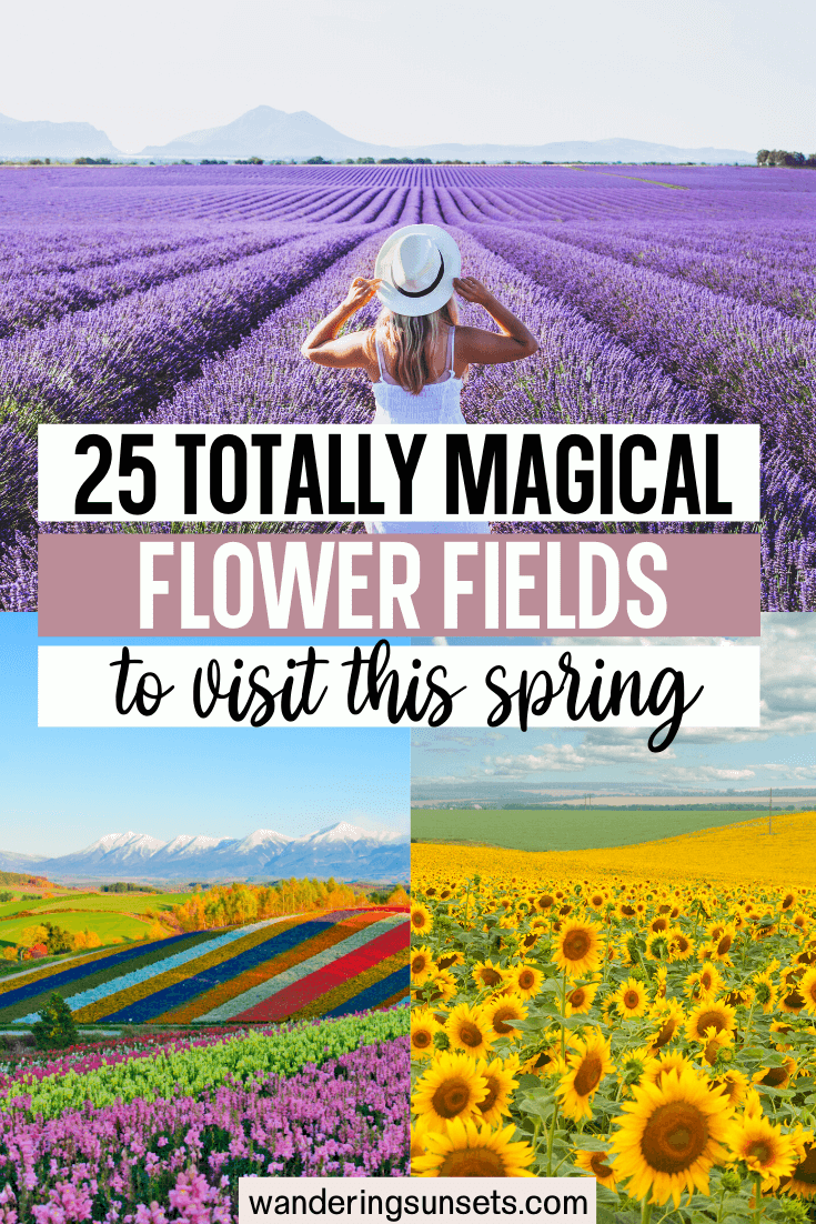 25 Most Instagrammable Flower Fields Around the World