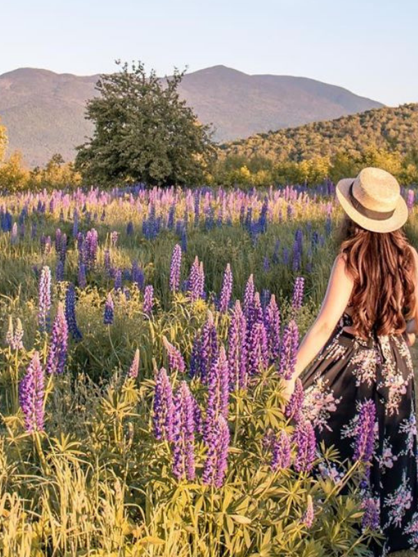 The Most Instagrammable Flower Fields in the World