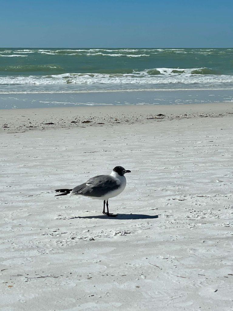 Sarasota - Workcation Destination in Florida USA