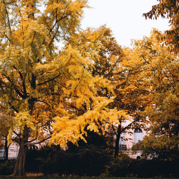Paris in Fall - Champs de Mars