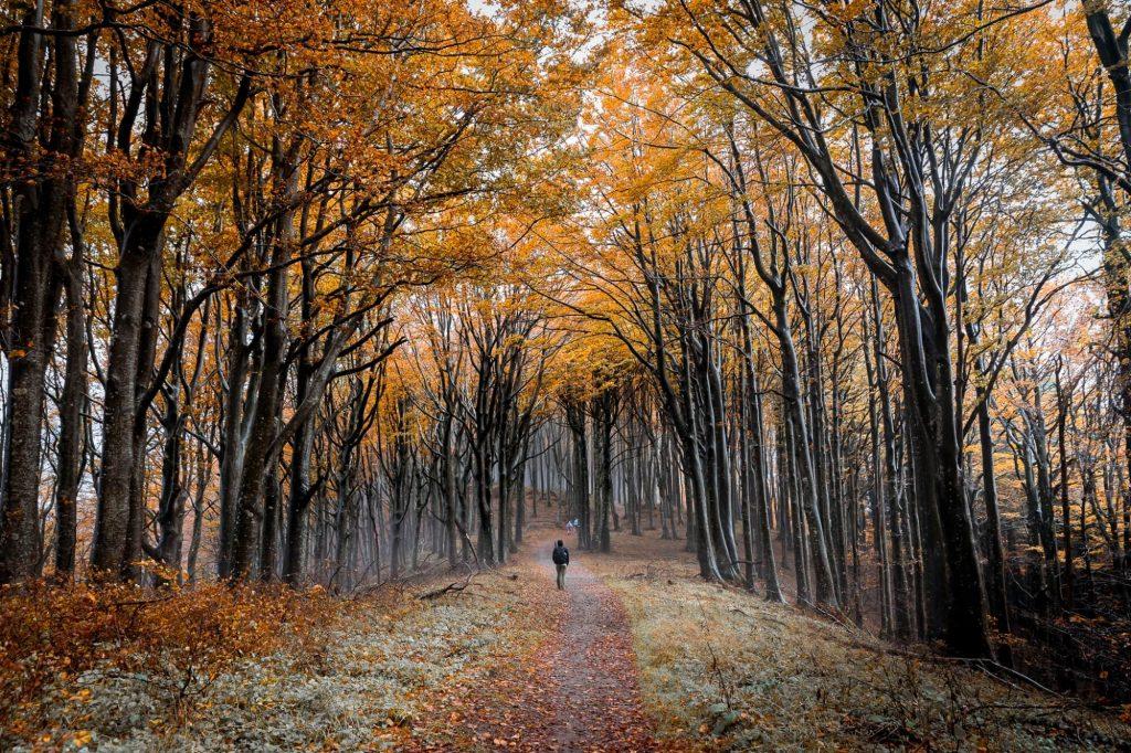 Casentinesi Forest National Park